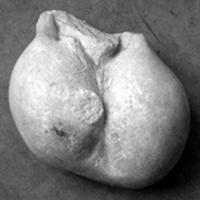 Testicules d'une statue grecque