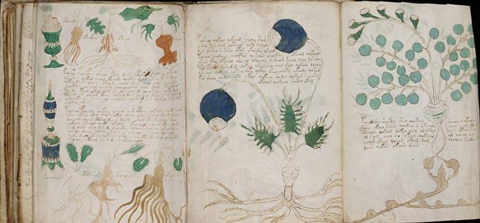 Des pages apparemment consacrées à la botanique - Manuscrit de Voynich