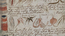 Voynich-manuscrit