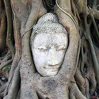 tête de Bouddha à Ayutayyah
