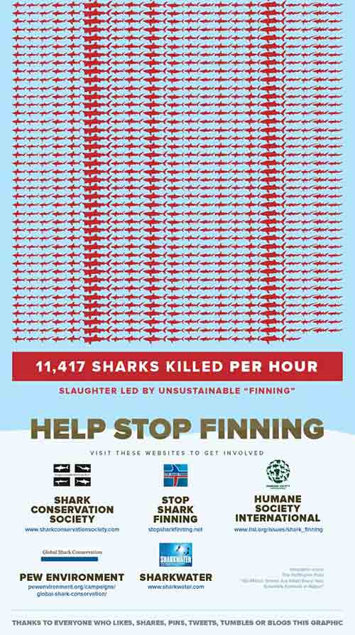 Shark-Attack-Stop-Finning-Infographic_02