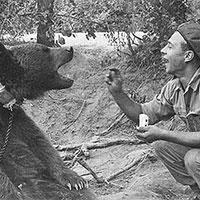 L'ours Wojtek