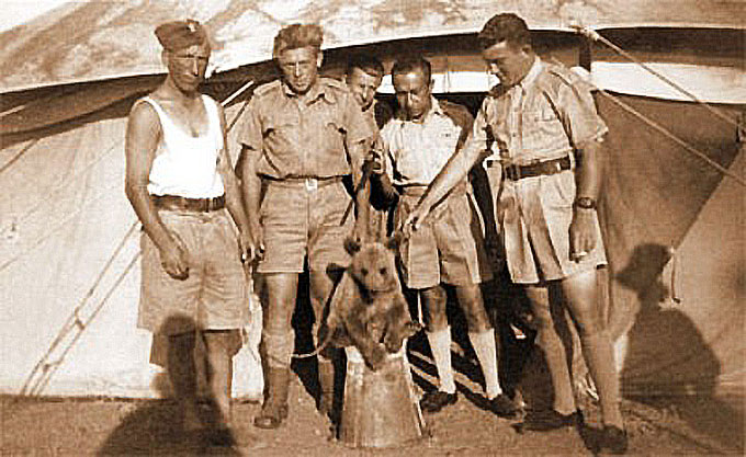 L'ours Wojtek, seul ours à avoir servi dans l'armée pendant la seconde Guerre mondiale