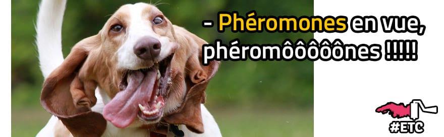 pheromones-chien