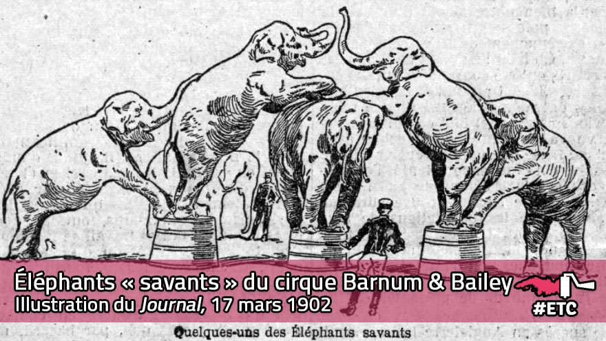 Éléphants savants du cirque Barnum